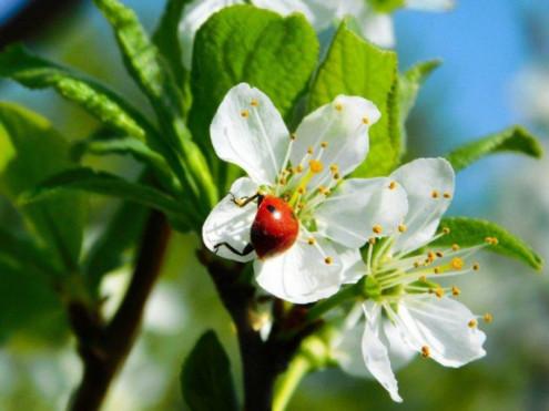 Травневий цвіт