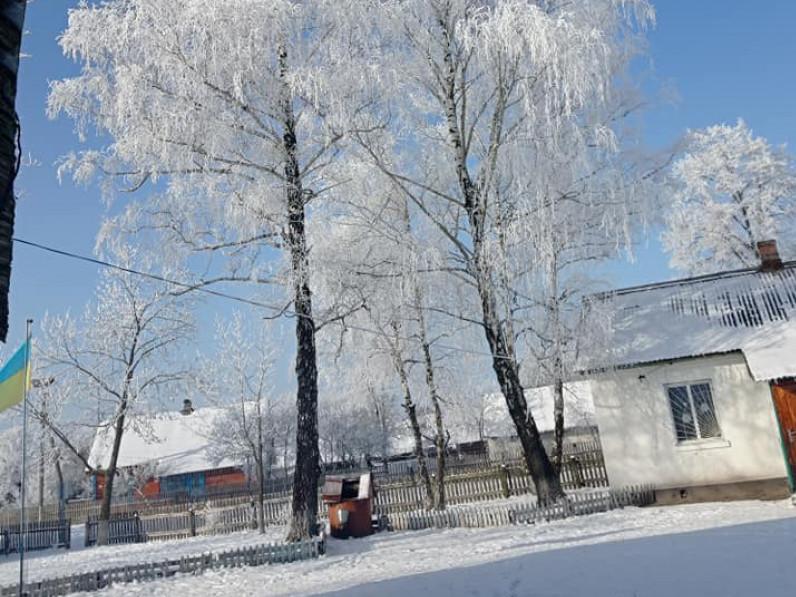 Лахвичі взимку