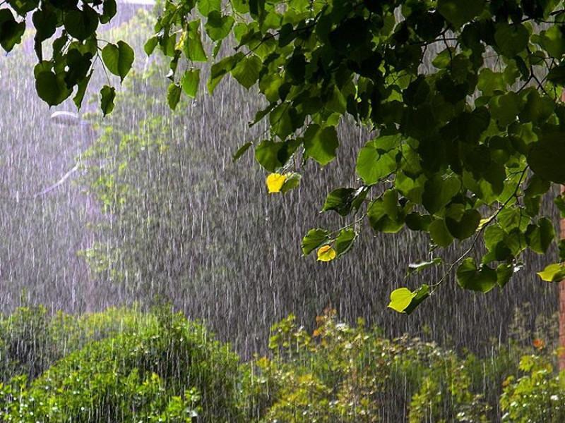 при картинки идет дождь в лесу теперь тут