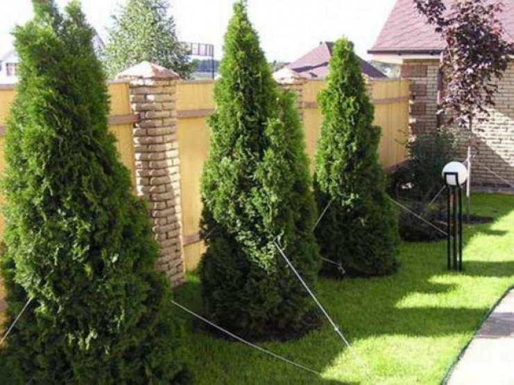 Планують заборонити садити дерева впритул до сусідньої ділянки