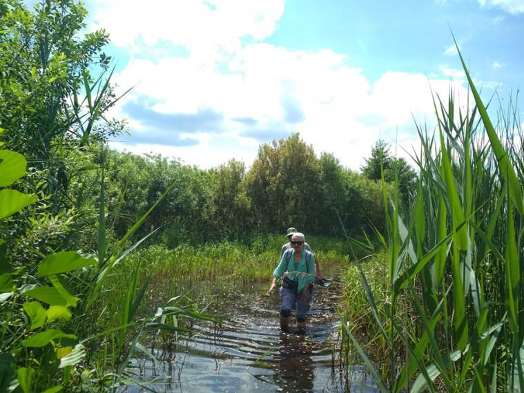 Лісами та болотами Любешівщини