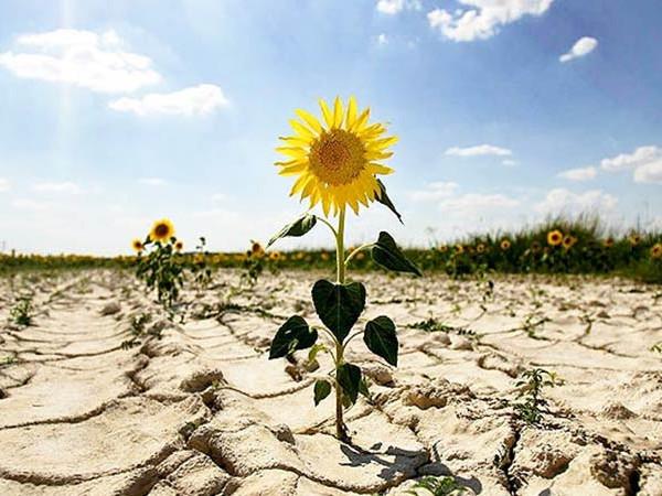 Через стрімкі зміни кліматичних поясів Україні загрожує опустелювання