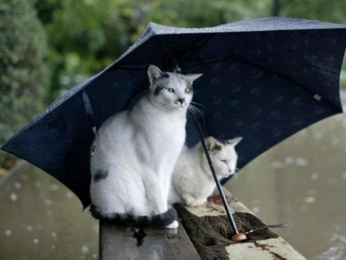 Погода / Фото ілюстративне