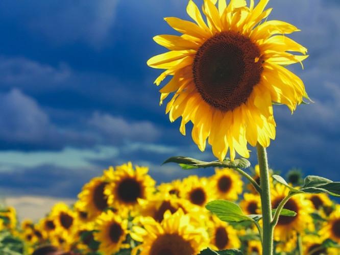 Серпневі діти сонця