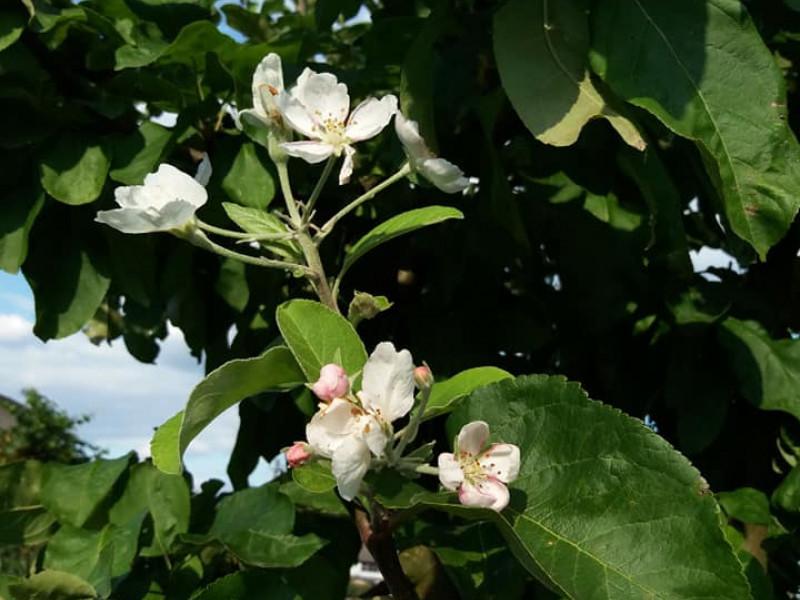 Вересневий цвіт