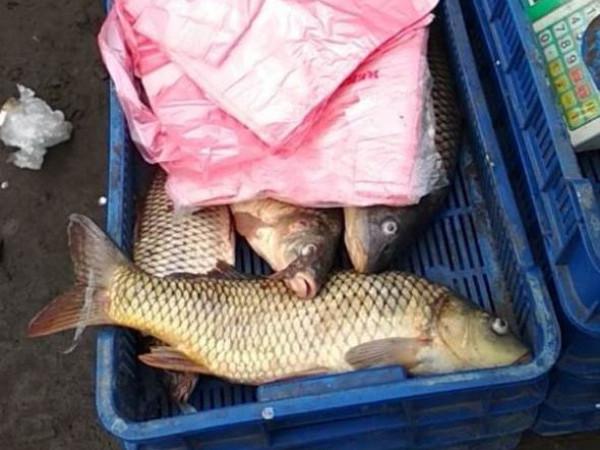 На цю рибу продавець не мав документів