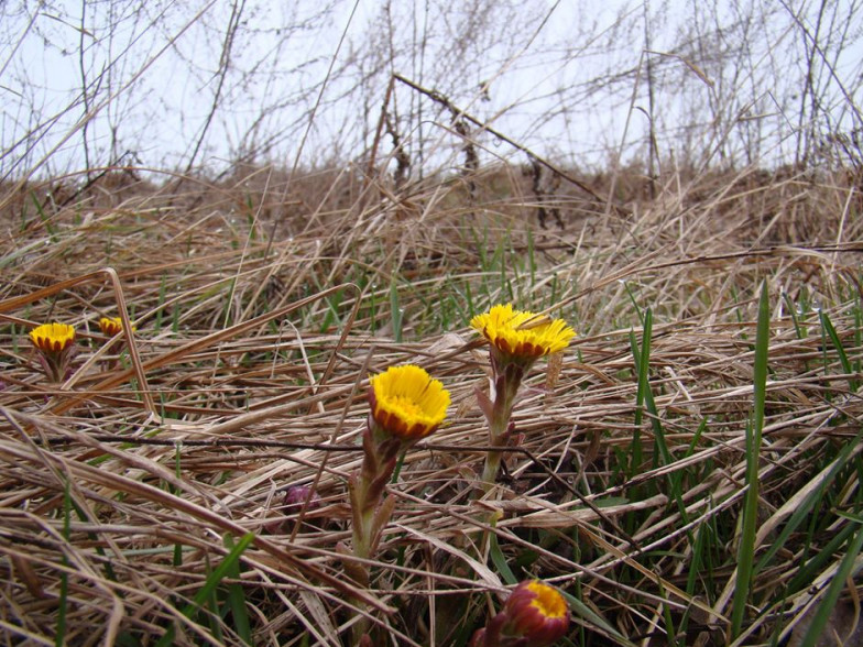 У національному парку зацвіли весняні квіти