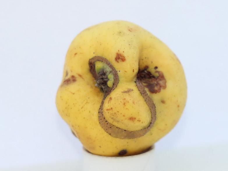 Яблуко-маска