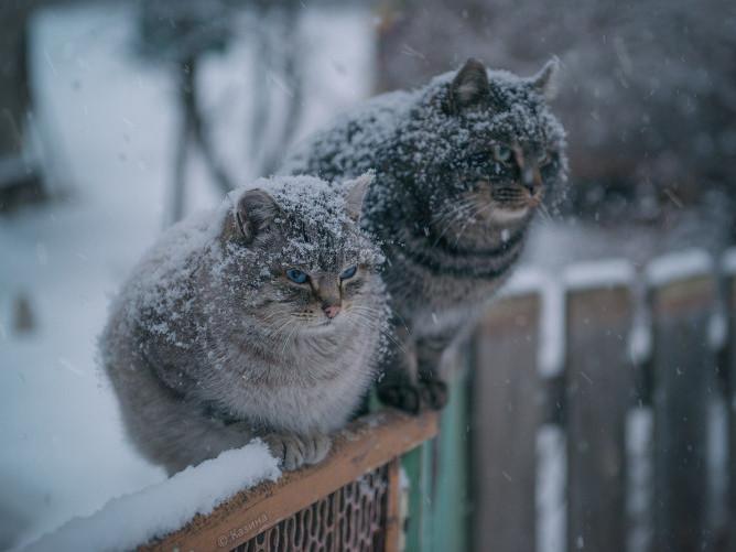 Синоптики прогнозують дощ зі снігом