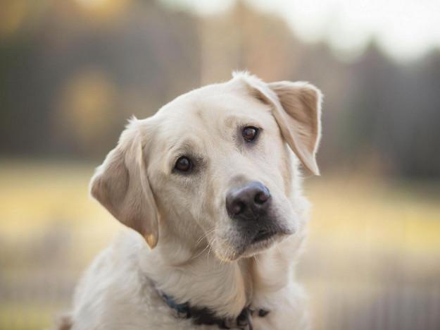Стерилізованих і вакцинованих собак повернуть в Любешів