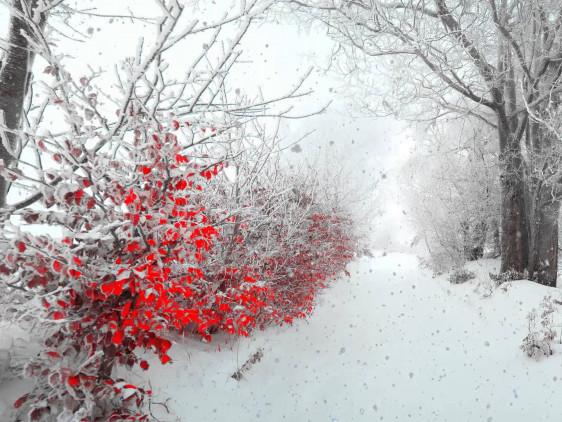 Прогнозують сніг
