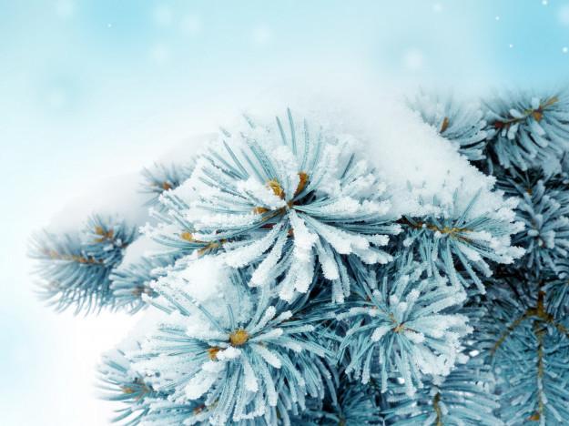 Нічний сніг вранці стане слабшим