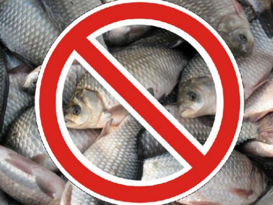 Волинянам заборонять ловити рибу