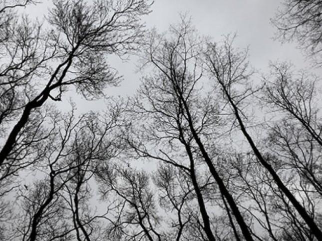 Прогноз погоди у Любешові