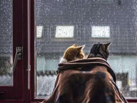 Увесь день йтиме дрібний дощ