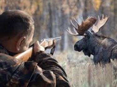 Браконьєри застрелили лося