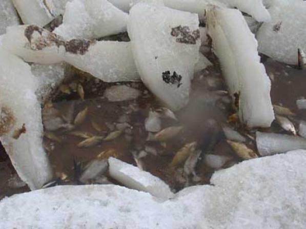 Рибоохоронний патруль закликає рибалок допомогти рибі вижити під льодом