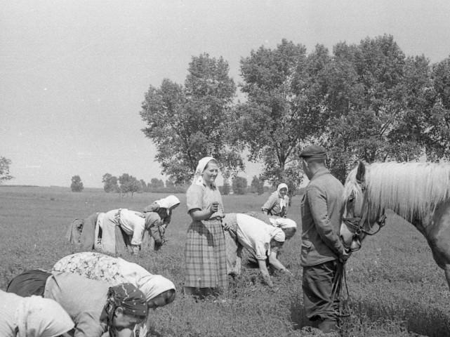 Колгоспниці працюють у полі