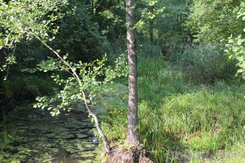 Любешівські ліси