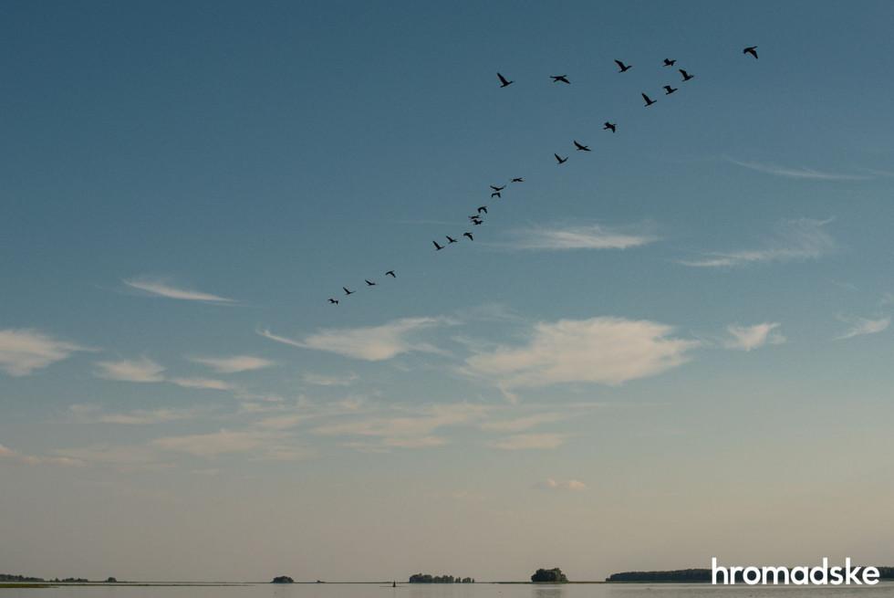 Птахи летять над Київським водосховищем