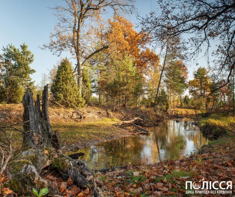 На території Рівненського природного заповідника представлені болота всіх типів, які трапляються на українському Поліссі